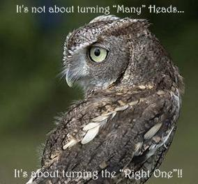 Headturned Owl