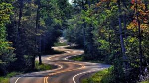 curvy_and_winding_forest_road_trees_nature_hd-wallpaper